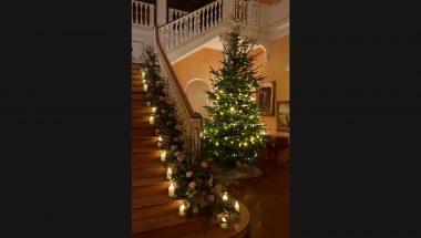 Christmas-Tree-Website